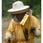 Apicultor recolectando miel en Sabinares del Arlanza