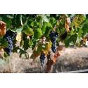 Viñedos de Arlanza, Bodegas Sierra ,  Cascajuelo